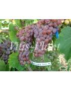 Variedades para vinos blancos